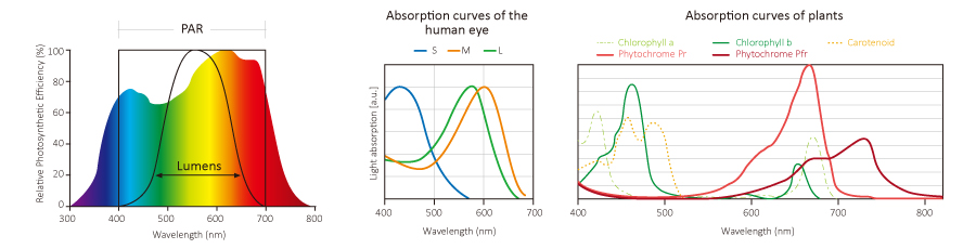 PAR wavelength range and absorption curvese cultivation