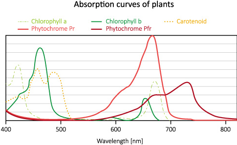 Absorption curves of plants